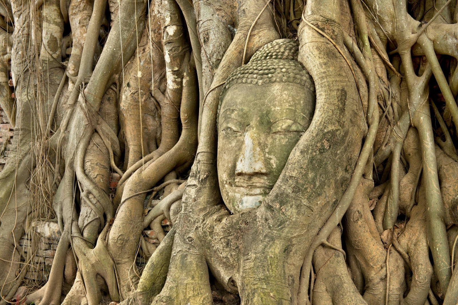 Top 8 des hôtels pas chers à Ayutthaya - photo du célèbre bouddha dans les racines d'un arbre