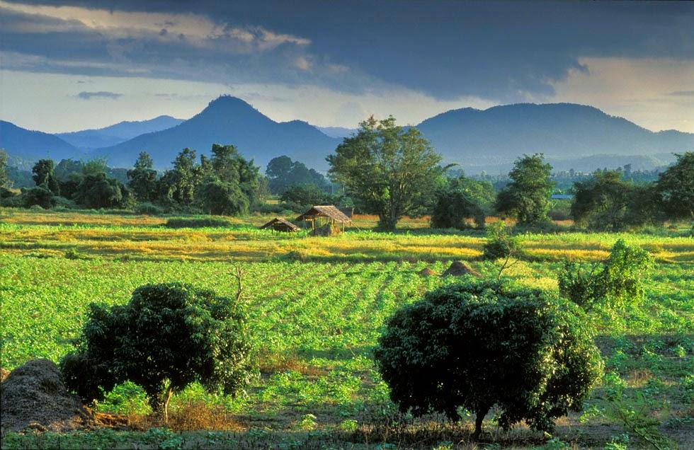Guide de Pai et Mae Hong Son - Paysage de rizières à Pai