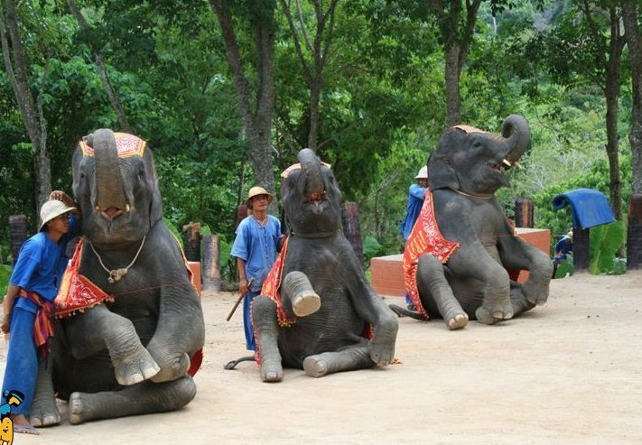 Les choses à ne pas faire à Phuket - Spectacle d'éléphants